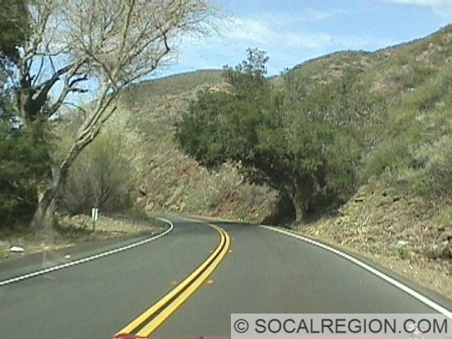 Typical tree lined stretch. Many trees, especially native Oak trees, curve over the roadway giving some parts a nearly tunnel-like effect.