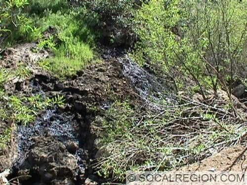 This oil seep is one of many found in Wiley Canyon.